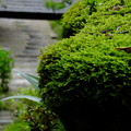 苔は長野県木曽路でも京都でも美しい
