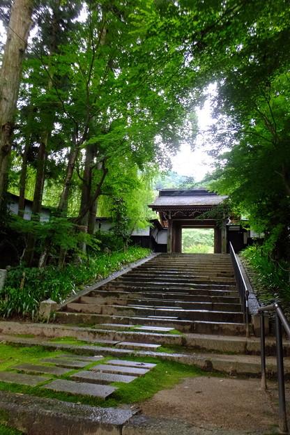 緑が美しい山門