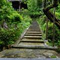 門の向こうに広がる緑色の世界、もみじ苔