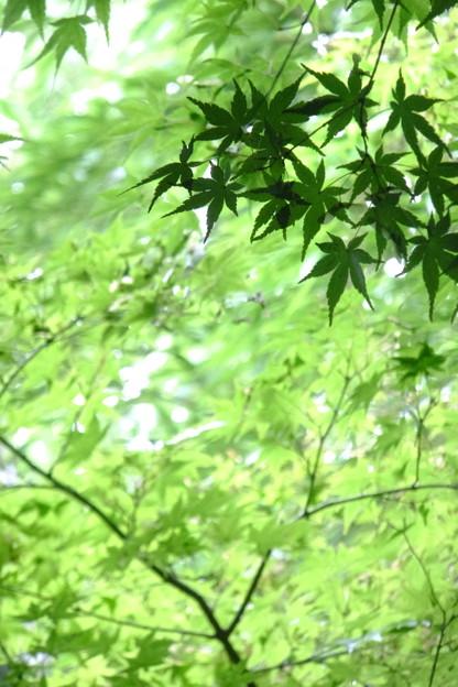 鈴虫寺の山道は見上げる限りの緑が美しい