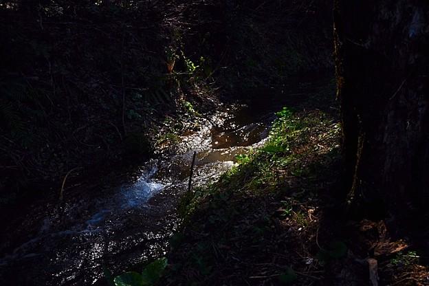 木洩れ日の小川