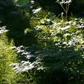 森の斜光線