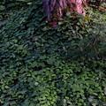 写真: 豊かな森だ・・・