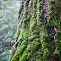 写真: 経年の苔