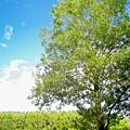 写真: 湿原の木