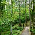 写真: 森の入り口