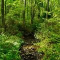写真: 湿原の小川
