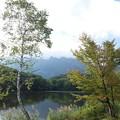 写真: 白樺と鏡池