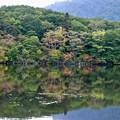 写真: 色づき始める森