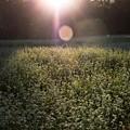 写真: 暖かな光