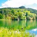写真: 丸池