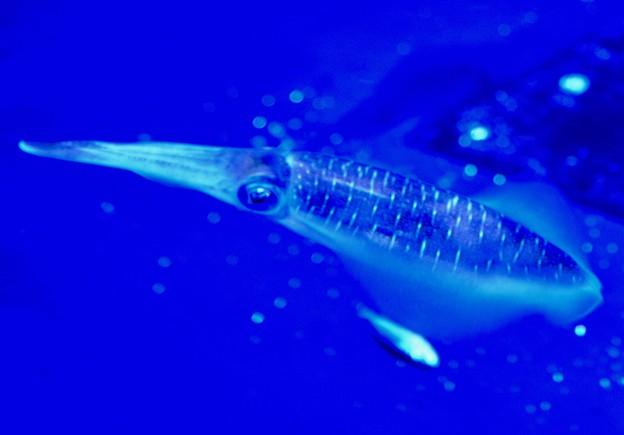 イカは地球外生物の影響から生まれた
