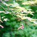 逆ハートに見えたお花