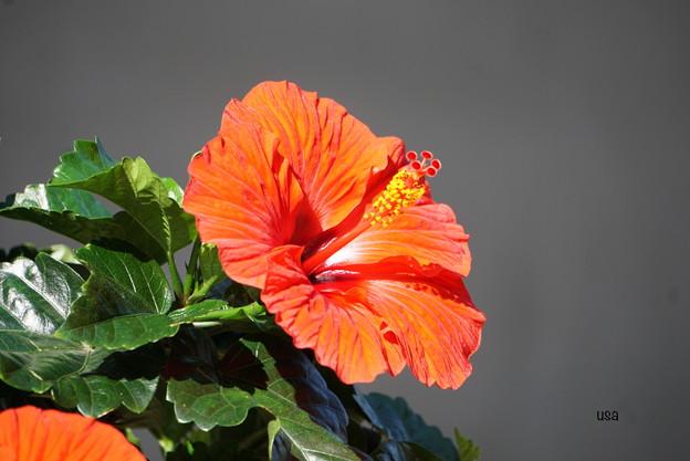 写真: ハワイアン~