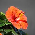 Photos: ハワイアン~