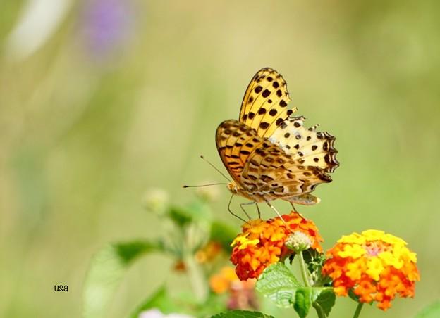 蝶々の世界