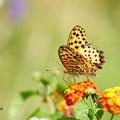 写真: 蝶々の世界