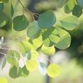 写真: 葉の音符