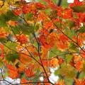 写真: 見上げる空に紅葉