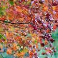 Photos: 秋へと、バトンリレー