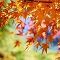 まだ秋を感じていたい、、