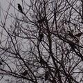 写真: 鳥籠