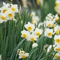 Photos: 春1番が吹いたよ~!!