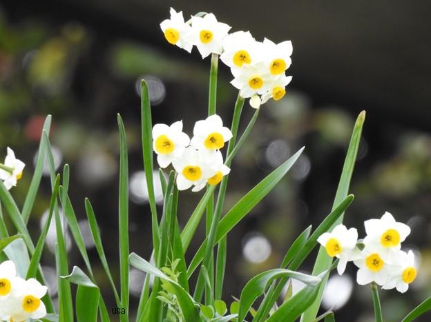 春は、すぐそこ