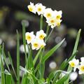 Photos: 春は、すぐそこ