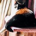 写真: 振り返り美人猫
