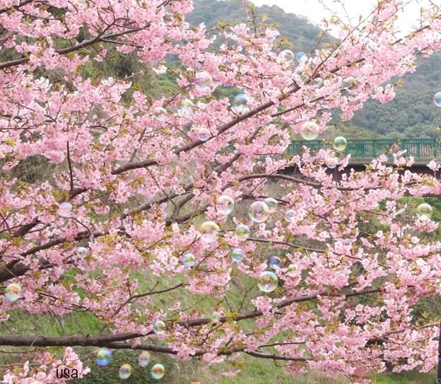 Photos: 桜色のしゃぼん玉に、夢を乗せて