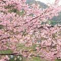 写真: 桜色のしゃぼん玉に、夢を乗せて