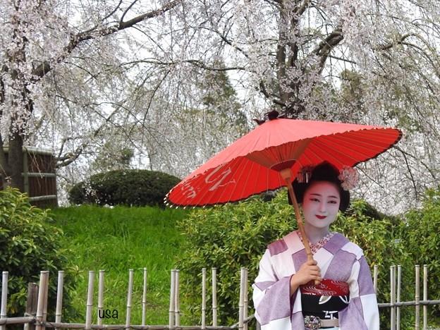 日本の美、京都の舞妓さん