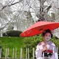 Photos: 日本の美、京都の舞妓さん