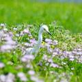 Photos: 蓮華畑の中で、見~つけたっ