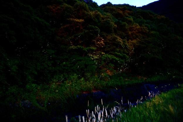 蛍の愛の灯火