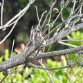 Photos: マツボックリの木の中で