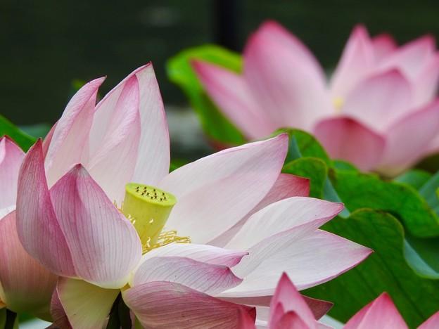 咲かせて、咲かせて