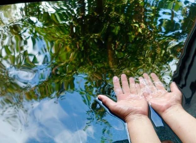 水の中の森