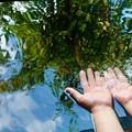 Photos: 水の中の森