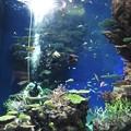 Photos: 珊瑚ショー