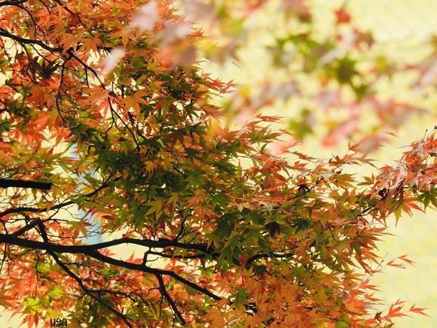 小さい秋、見つけた