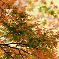Photos: 小さい秋、見つけた