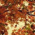 Photos: 紅葉の空
