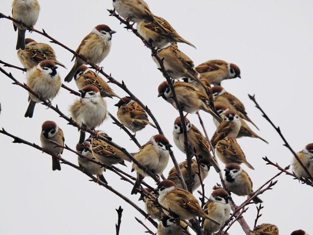 枯れ木に雀を咲かせましょう