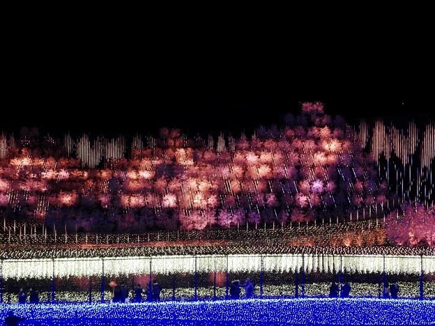夜空に咲く花火