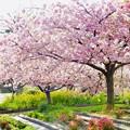 Photos: Sakura SAKU