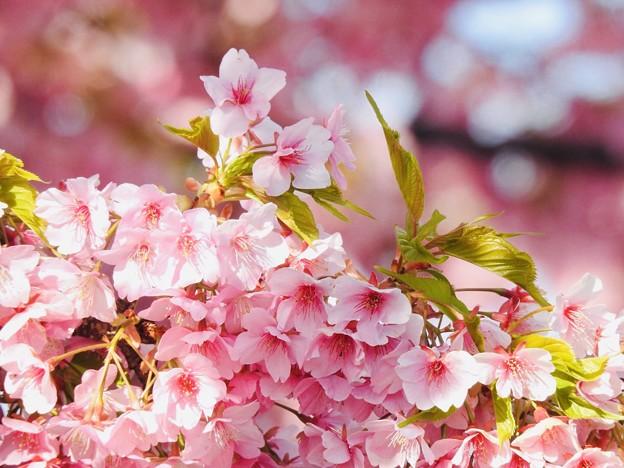 Photos: 春なのに、お別れですか?