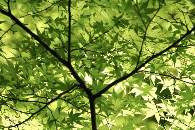 新緑の日傘