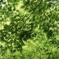 Photos: 緑に